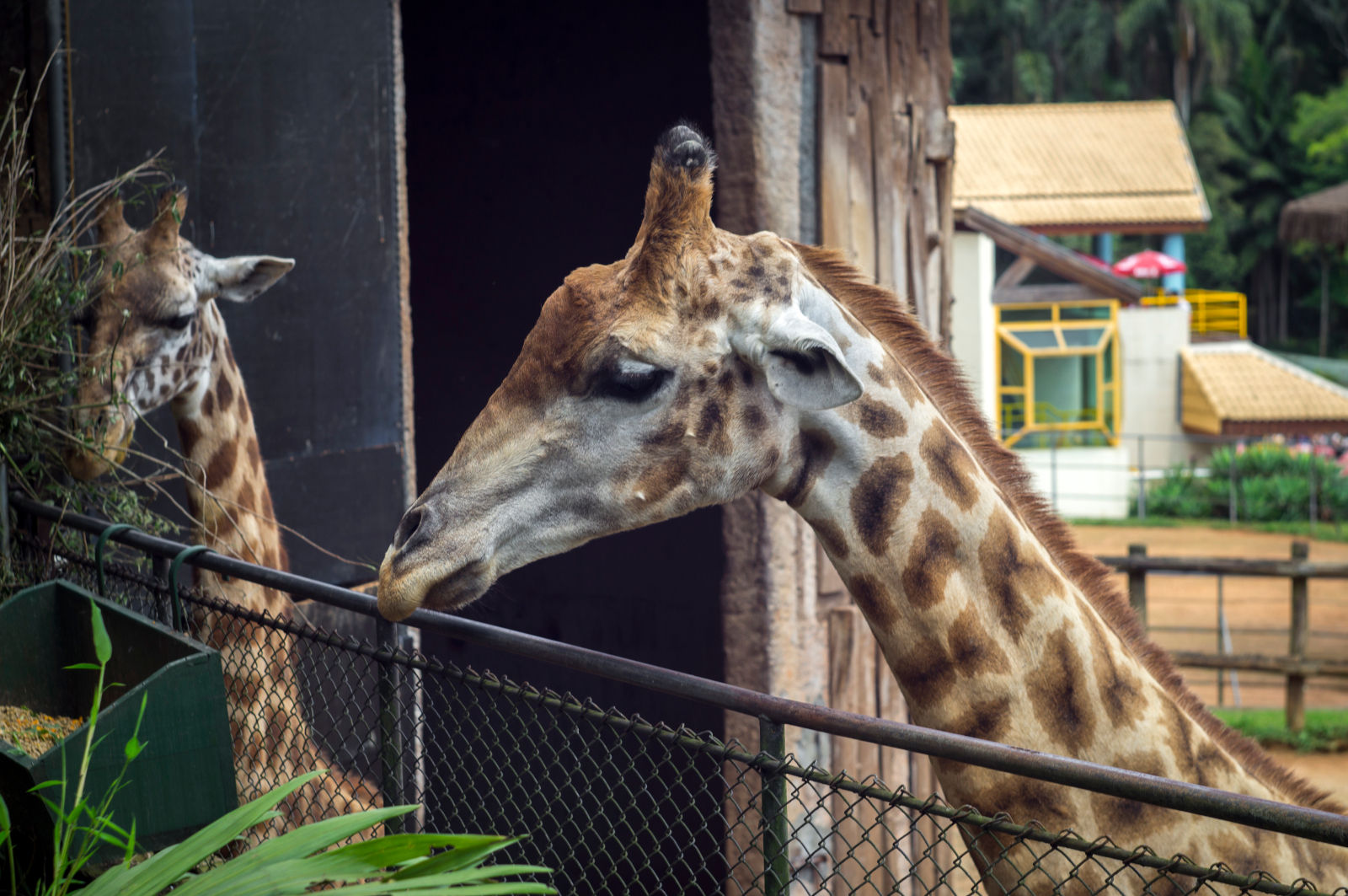 Zoochosis and the Many Ways We Have Failed Zoo Animals