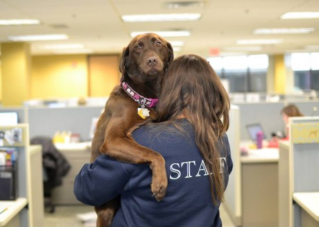 6 Reasons to Volunteer at Your Local Animal Shelter or Sanctuary
