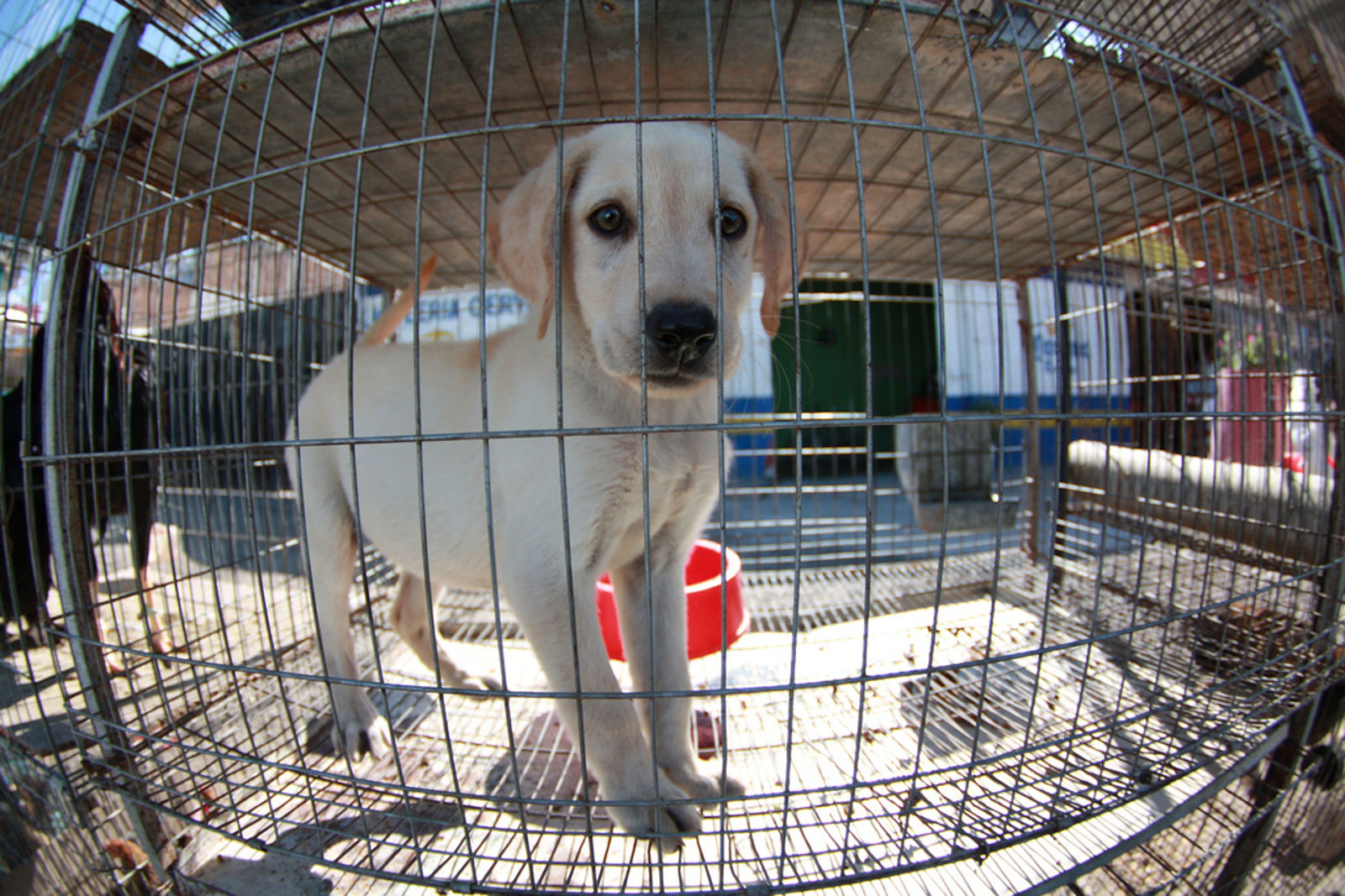 5 Things YOU Can Help Stop Puppy Mills