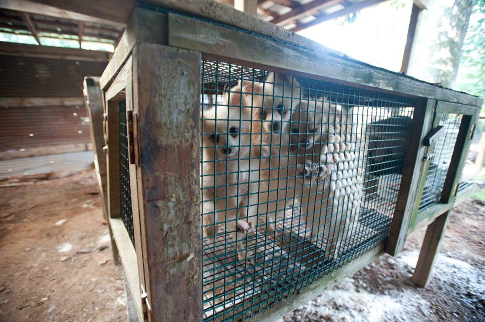 Anti-Puppy Mill Legislation on the Rise! Philadelphia and Illinois Consider Puppy Mill Pet Store Bans