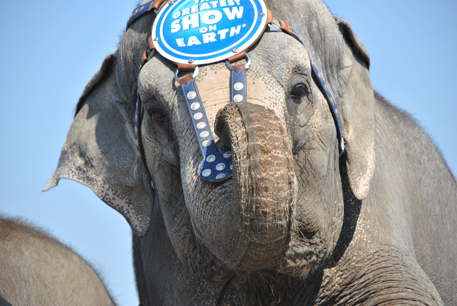 Ringling May Have Won the Battle, But We'll Win the War Against Circus Captivity