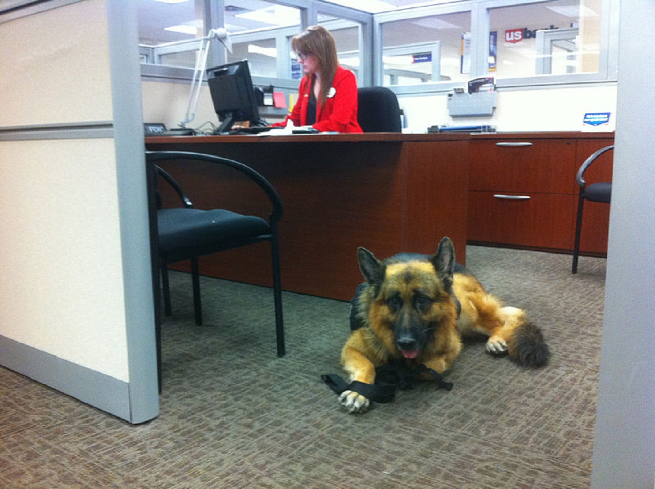 Why Bringing Your Dog to Work Is Good for Your Health