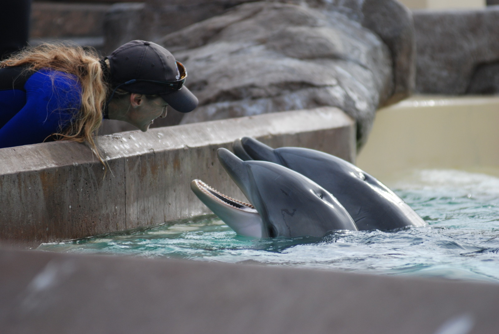 There Is Nothing 'Cute' About Whale and Dolphin Captivity – Here's Why