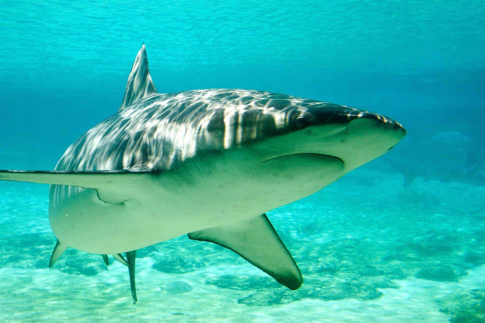 This Cruel Trade Is Rapidly Putting Sharks on the Path to Extinction