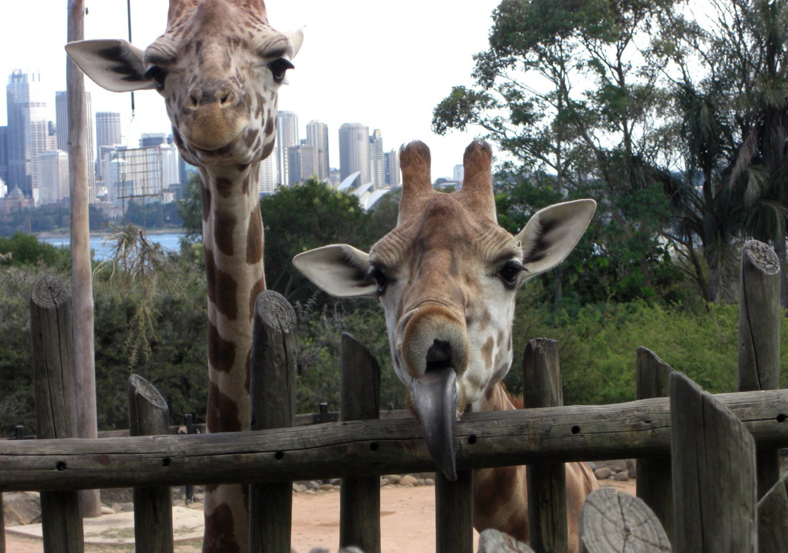 Not Into Zoos? Get Close to Animals and Nature With These Exciting Alternatives