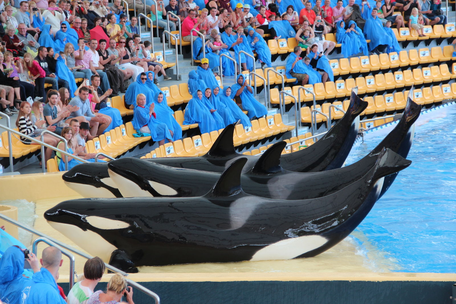 How 'Blackfish' Has Changed Our Perceptions of Whales and Dolphins
