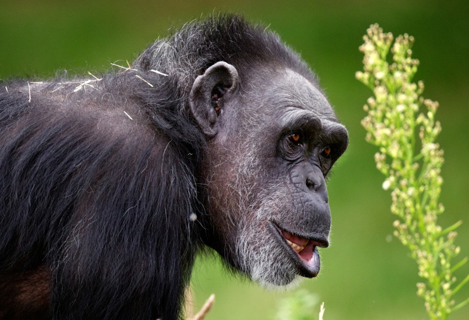 Meet the Best Nonhuman Primate Mothers in North America
