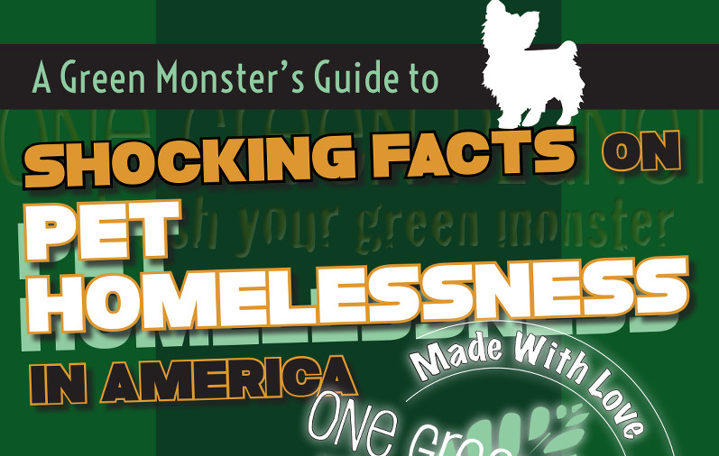Shocking Facts On Pet Homlessness1