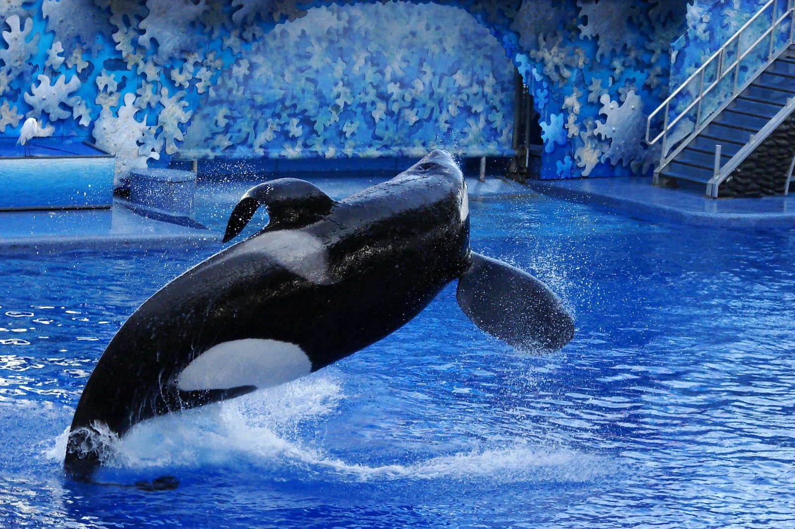 Watch Tilikum's Breathtaking Journey to Outer Space! (VIDEO)