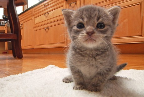 Volunteer Hero Saves 10,000 Kittens' Lives (VIDEO)