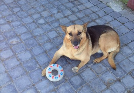 From Injury to Abandonment to a Life Filled with Love: Meet AJ the Dog
