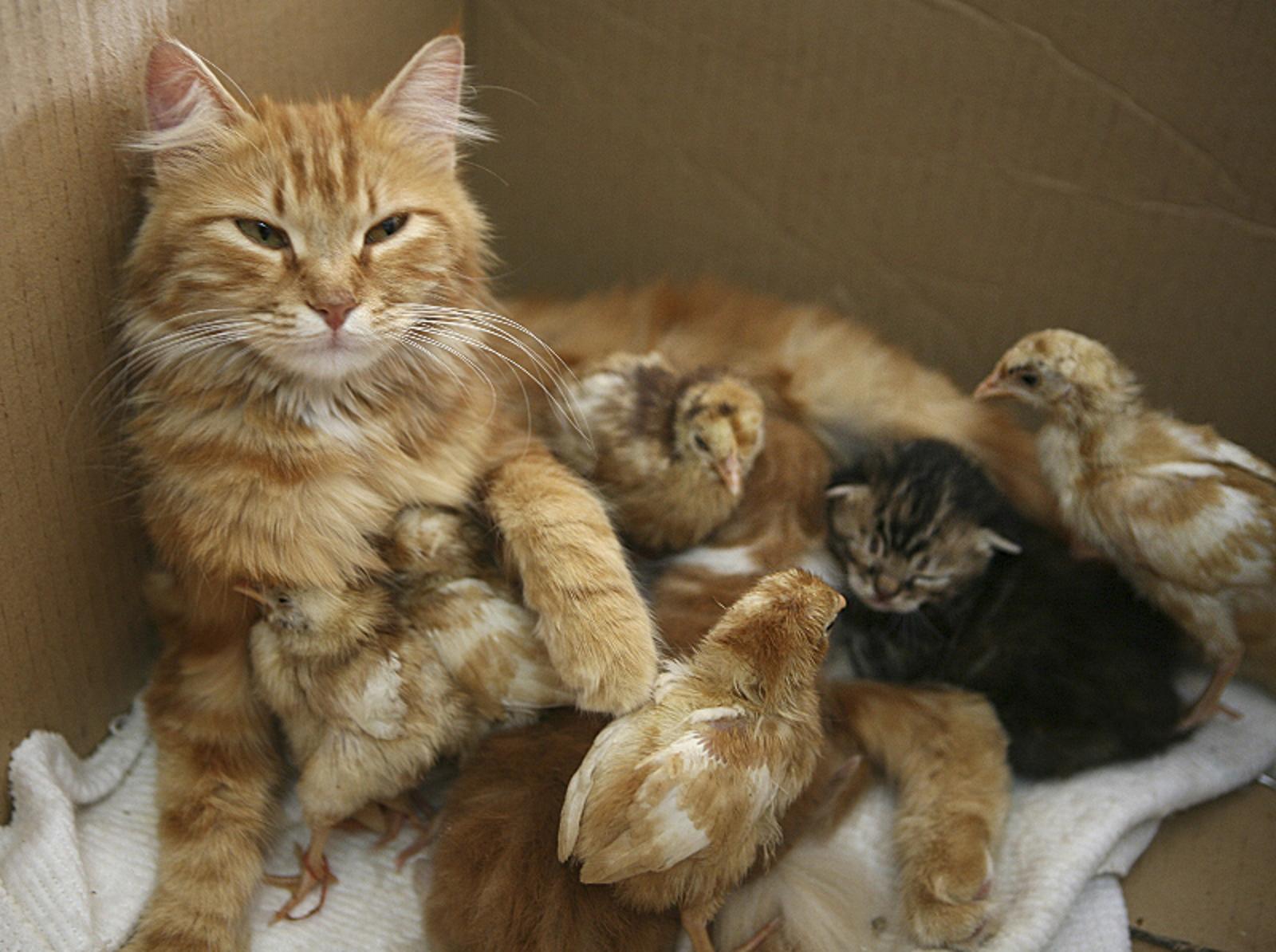 Our 7 Favorite Interspecies Animal Moms