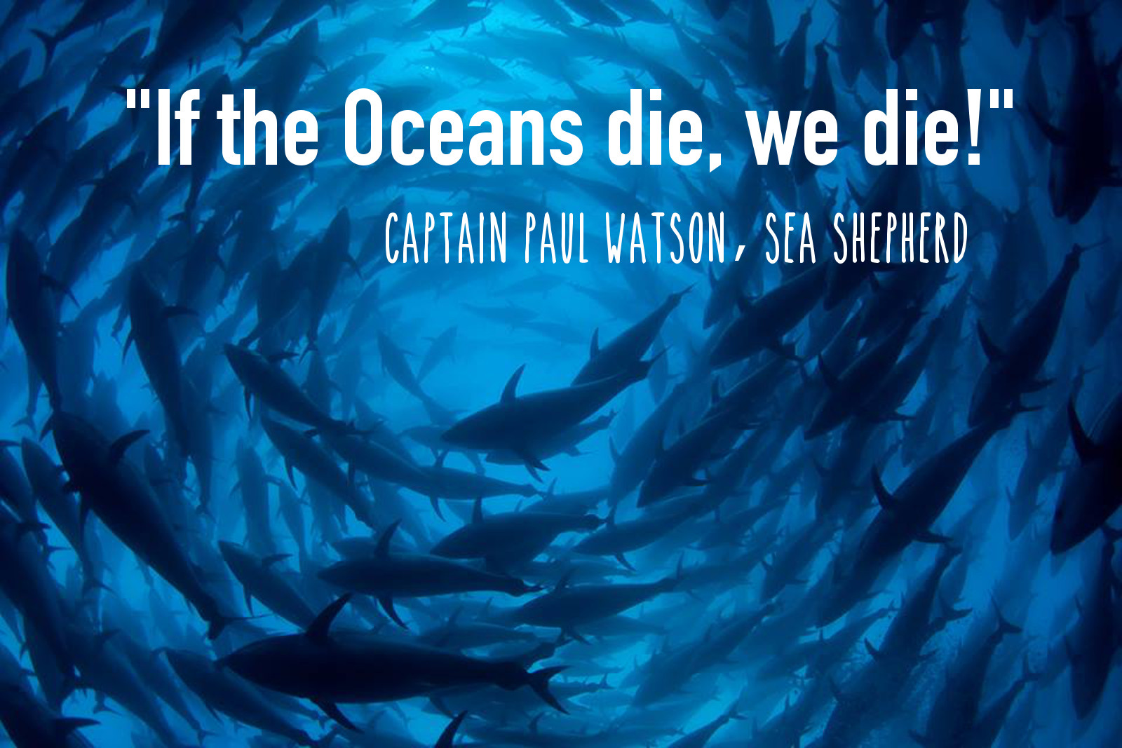 Beyond Whale Wars: Inside Sea Shepherd's Global Movement Defending Diversity in the Oceans