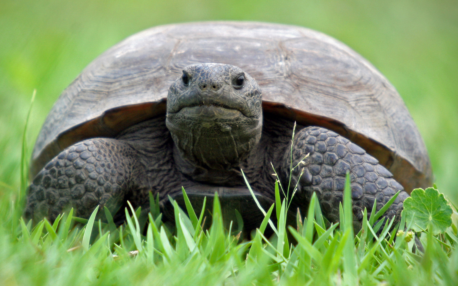 Helpful Things You Can Do To Save Turtles and Tortoises from Disappearing