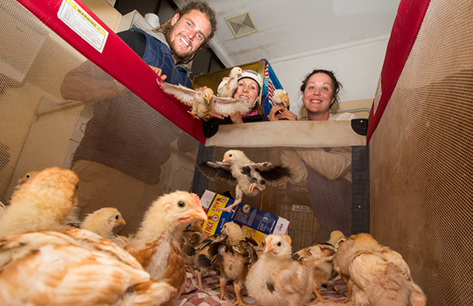 Cute Alert! 26 Chicks Rescued from Box Find New Home at Edgar's Mission
