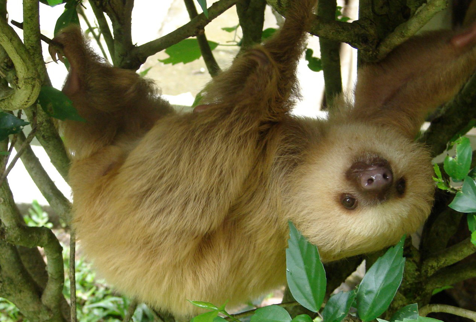 10 Reasons Sloths are Irresistibly Adorable