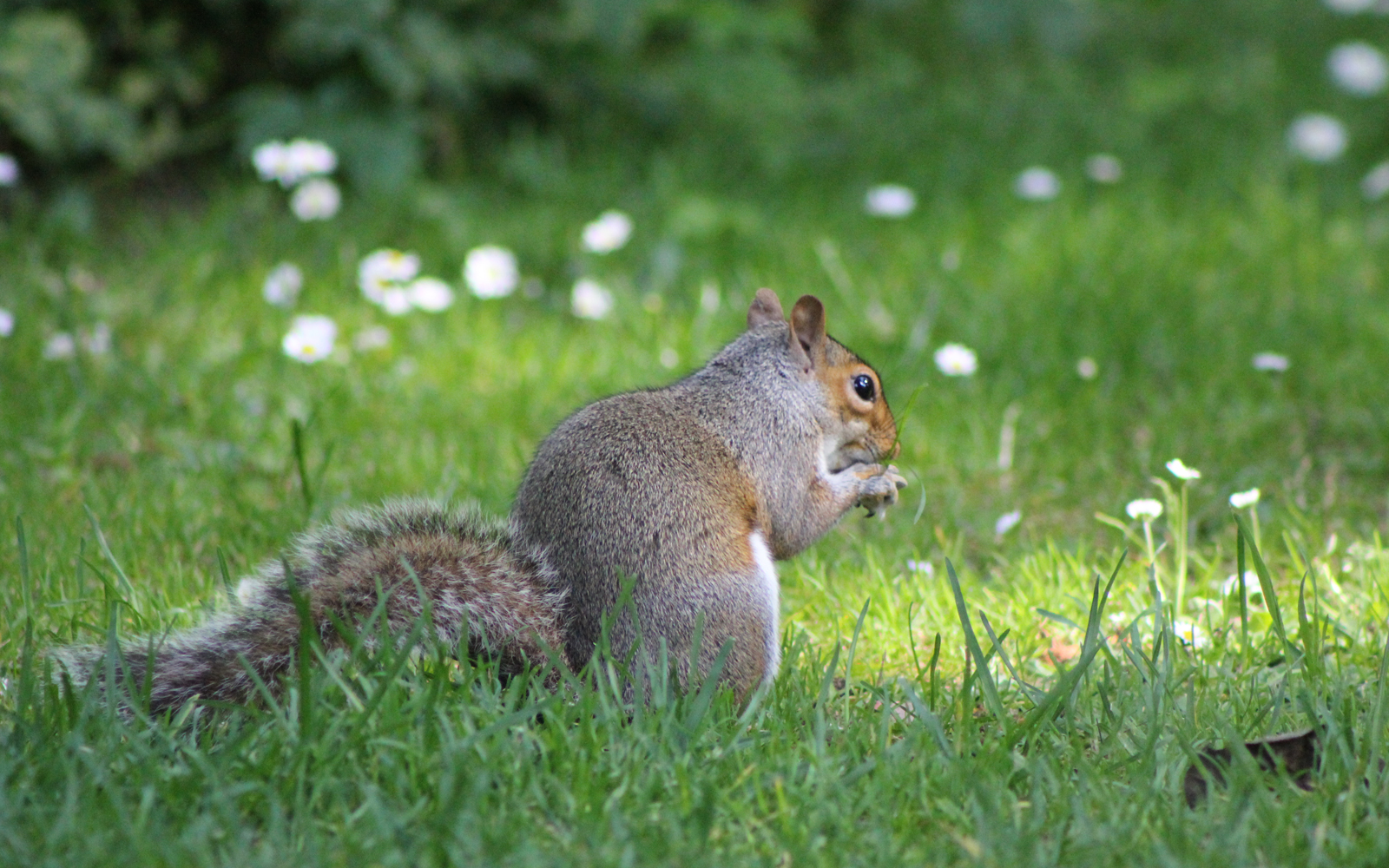Some Dos and Don'ts When Feeding Backyard Creatures