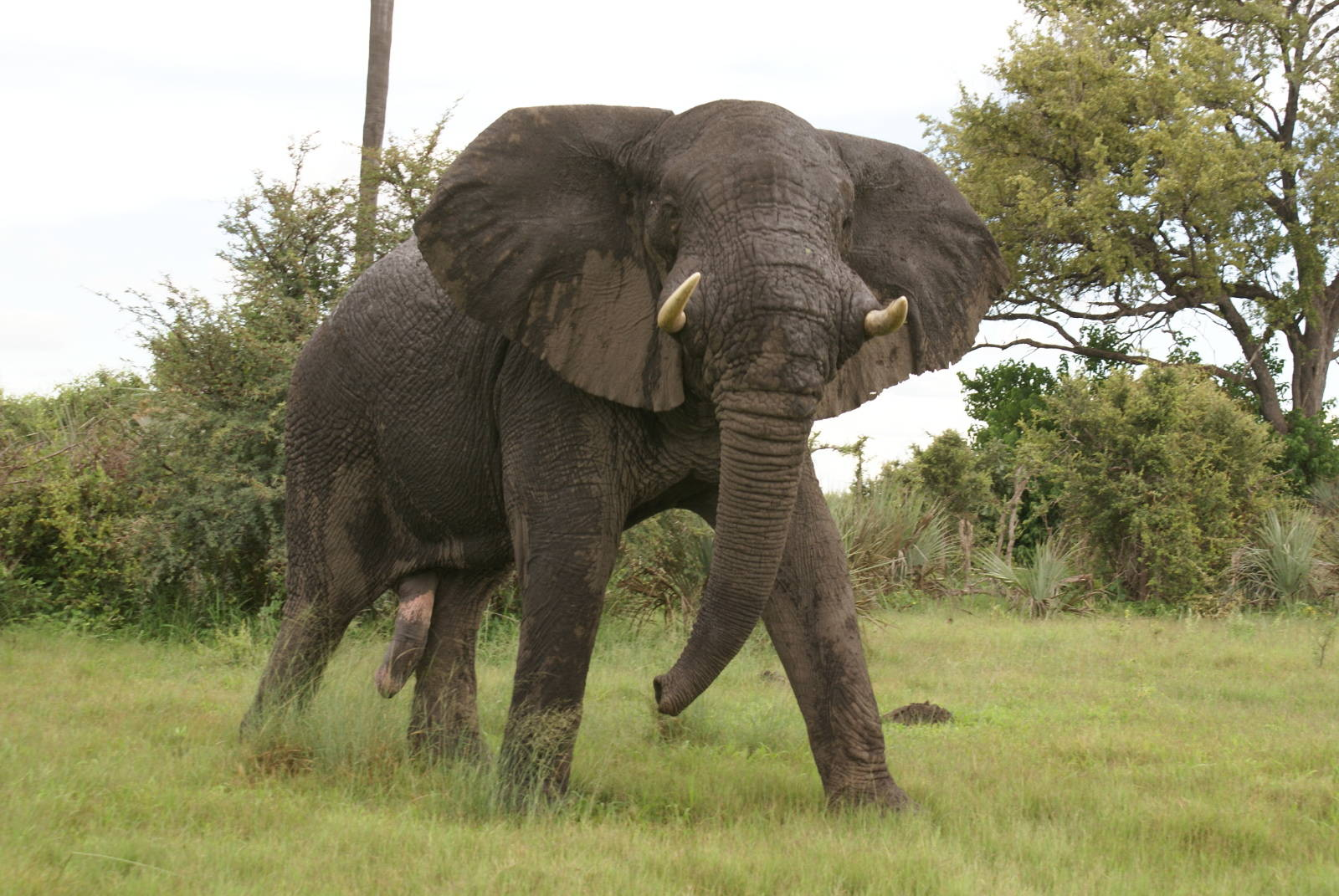 7 Organizations Working to End Human-Animal Conflict