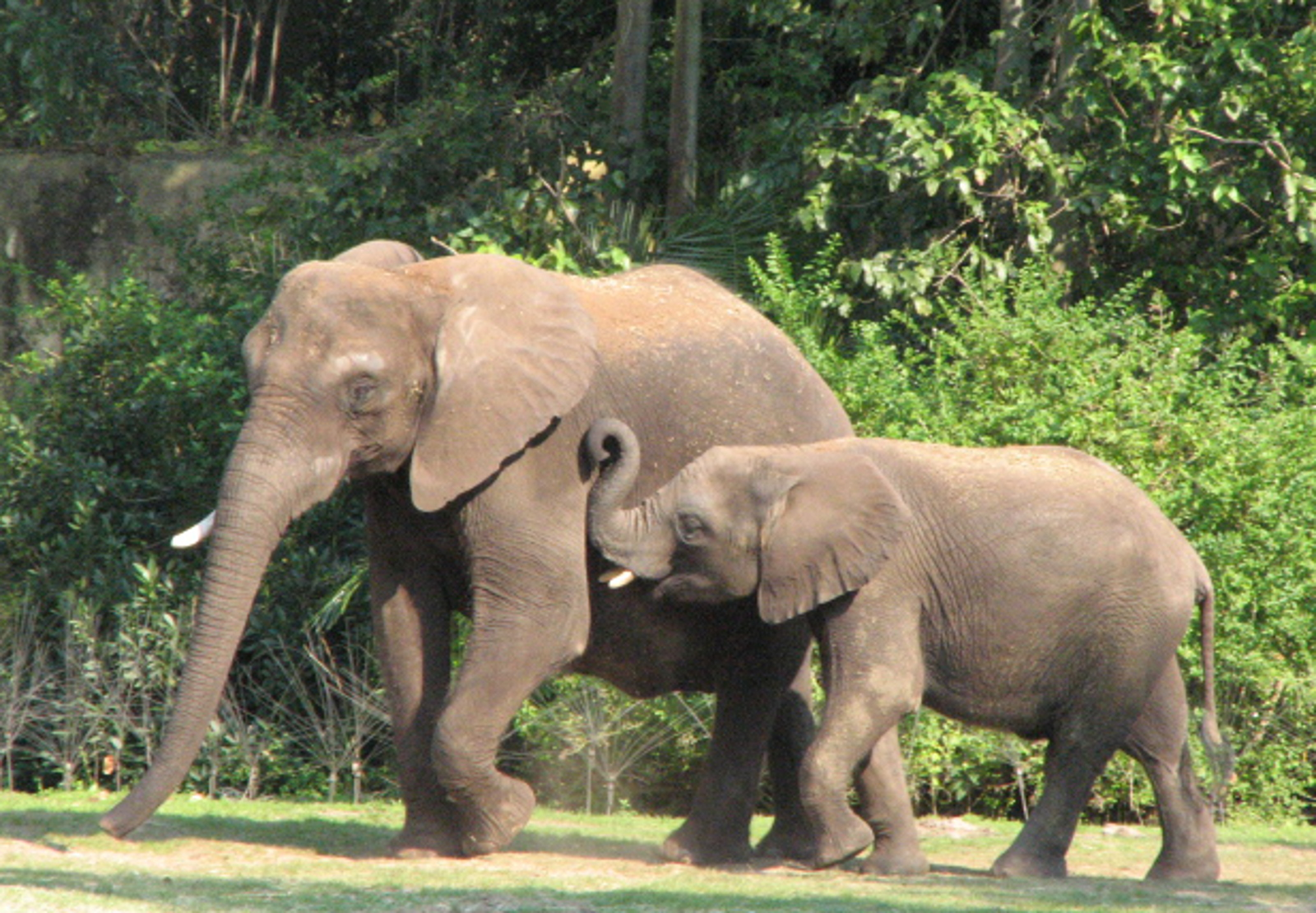 Why Local People Should Protect Elephants