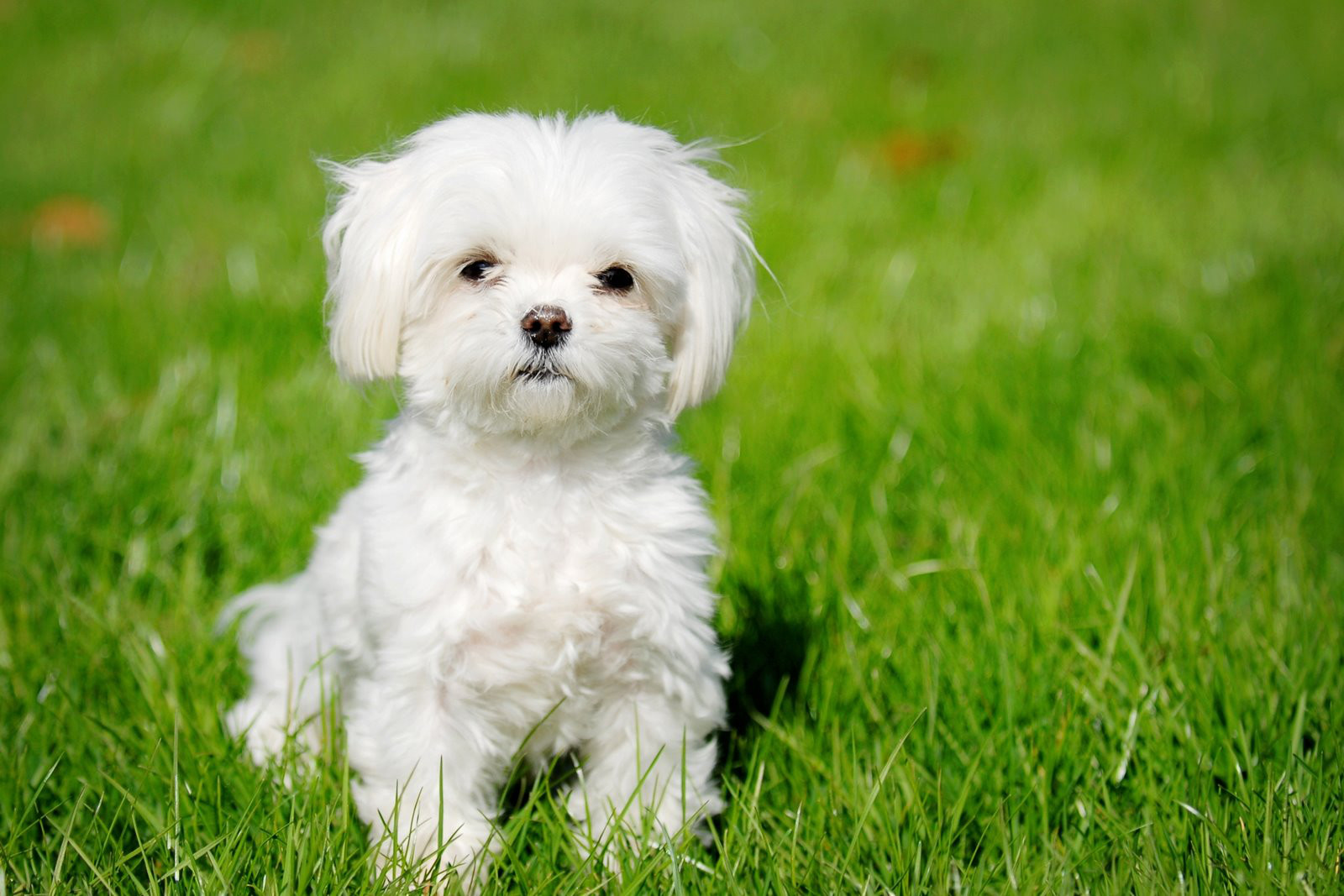 Major Puppy Mill Victories in the U.S.