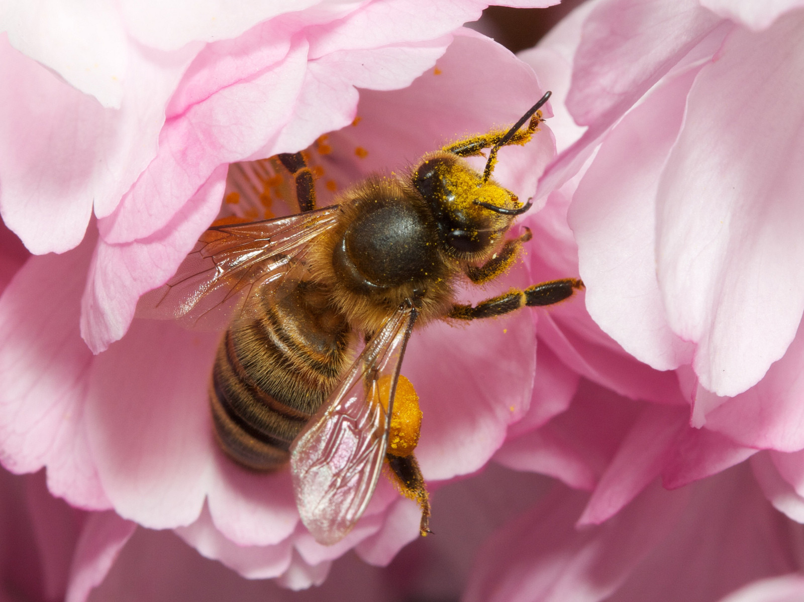 How Bees Benefit Other Animals