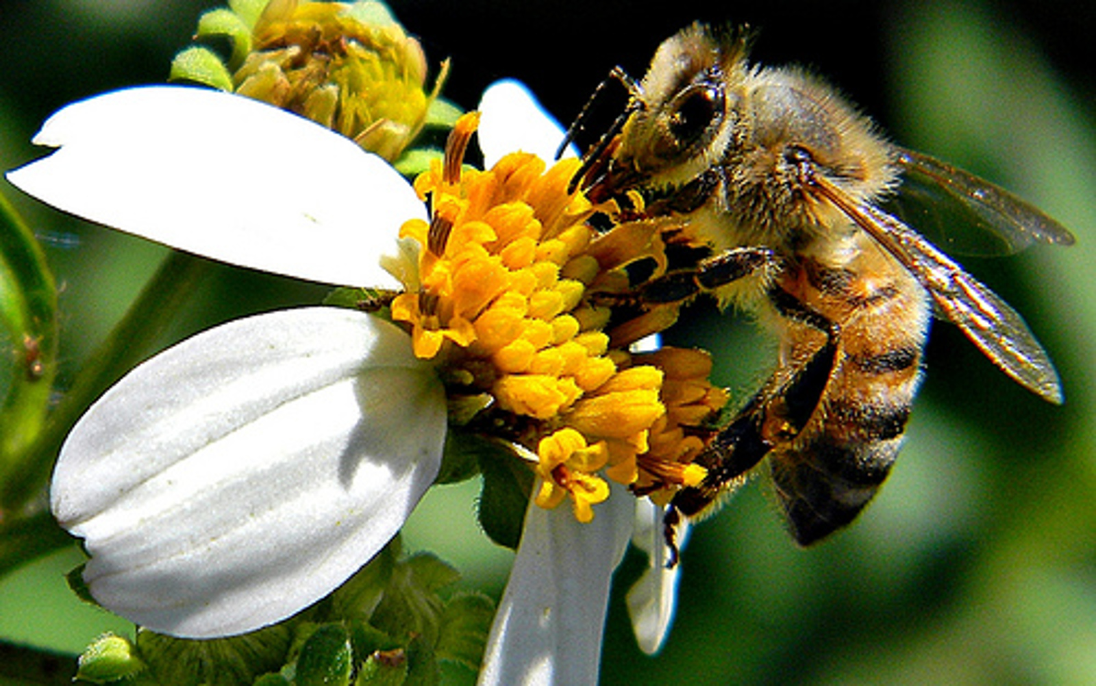 Here's How You Can Save Honeybees