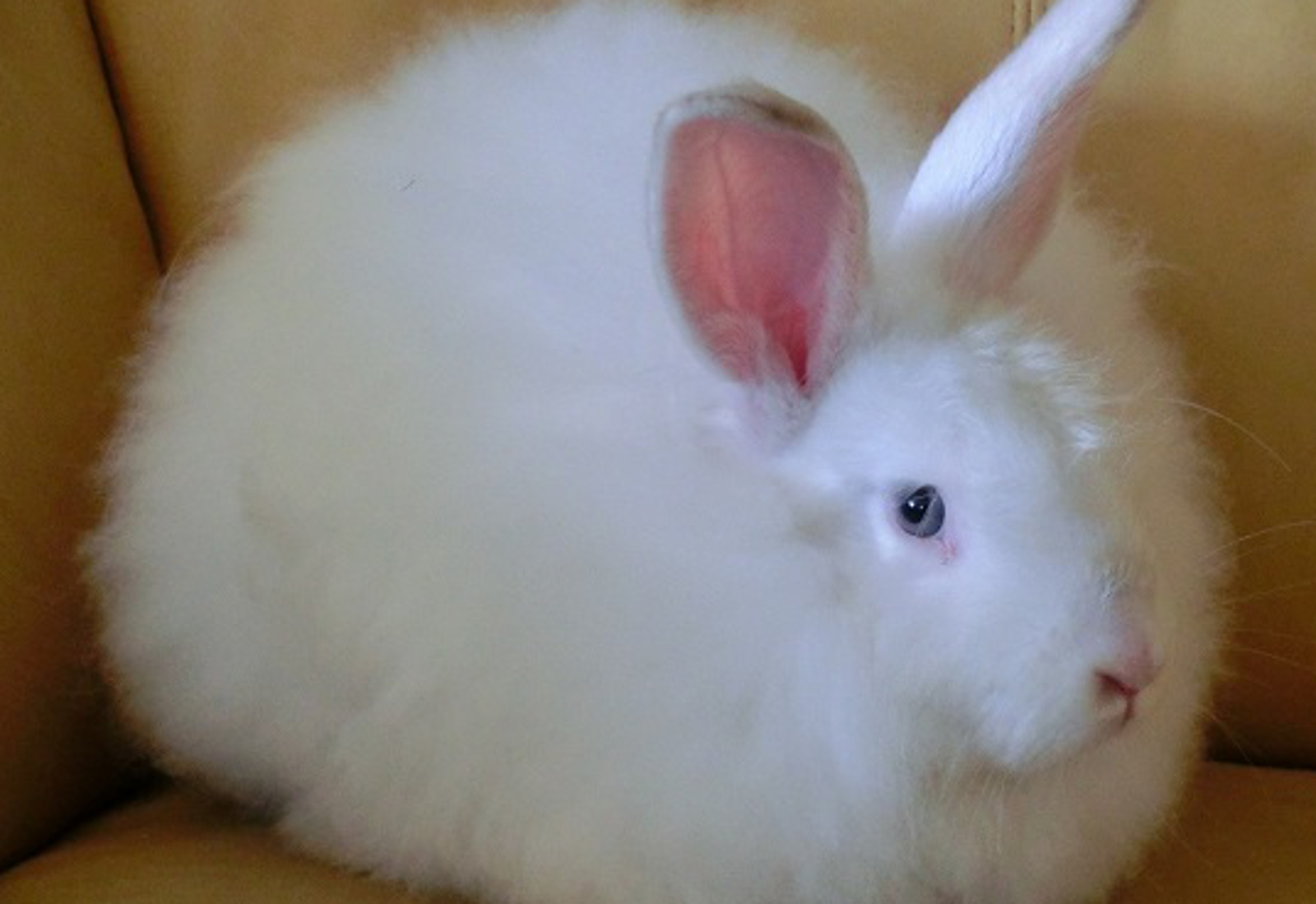 Fantastic Fashion Brands That Have Said NO To Angora!