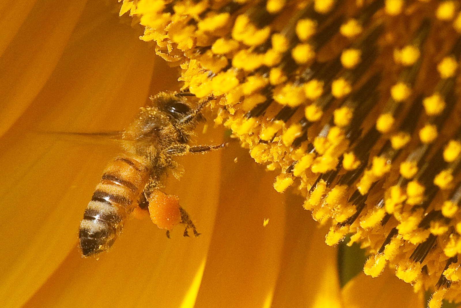 Ways You Can Help Bees Survive Today