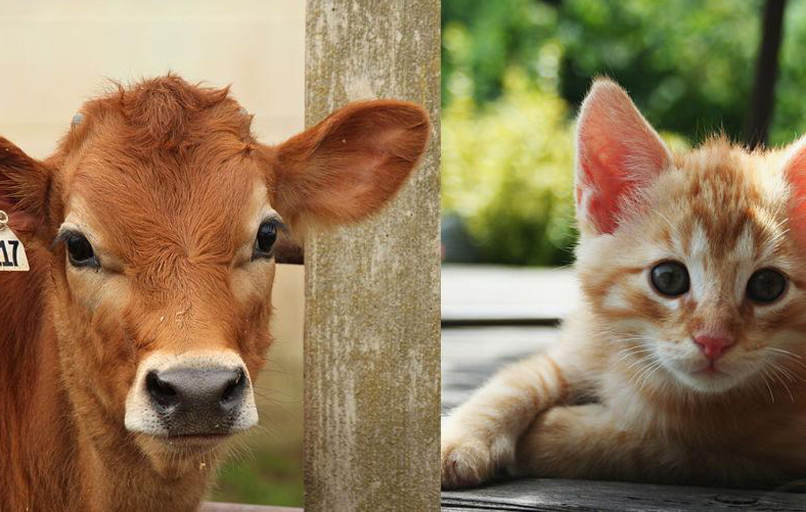 How to Change the Way You Think About Animals