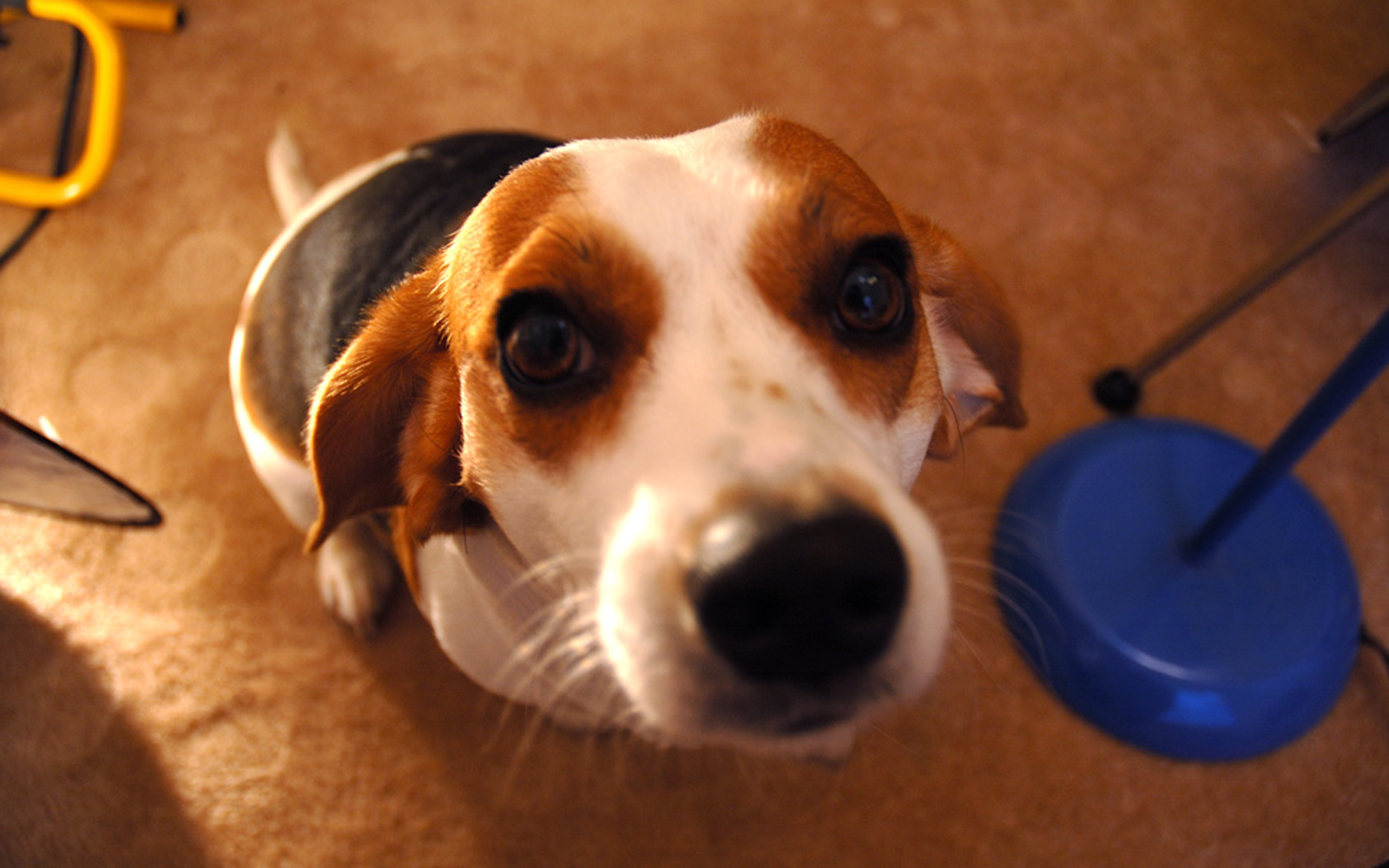 Behavior Hotlines You Can Contact to Get Help With Your Pets