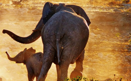 Baby Elephant Rescued From Well Runs to be Reunited With Mom
