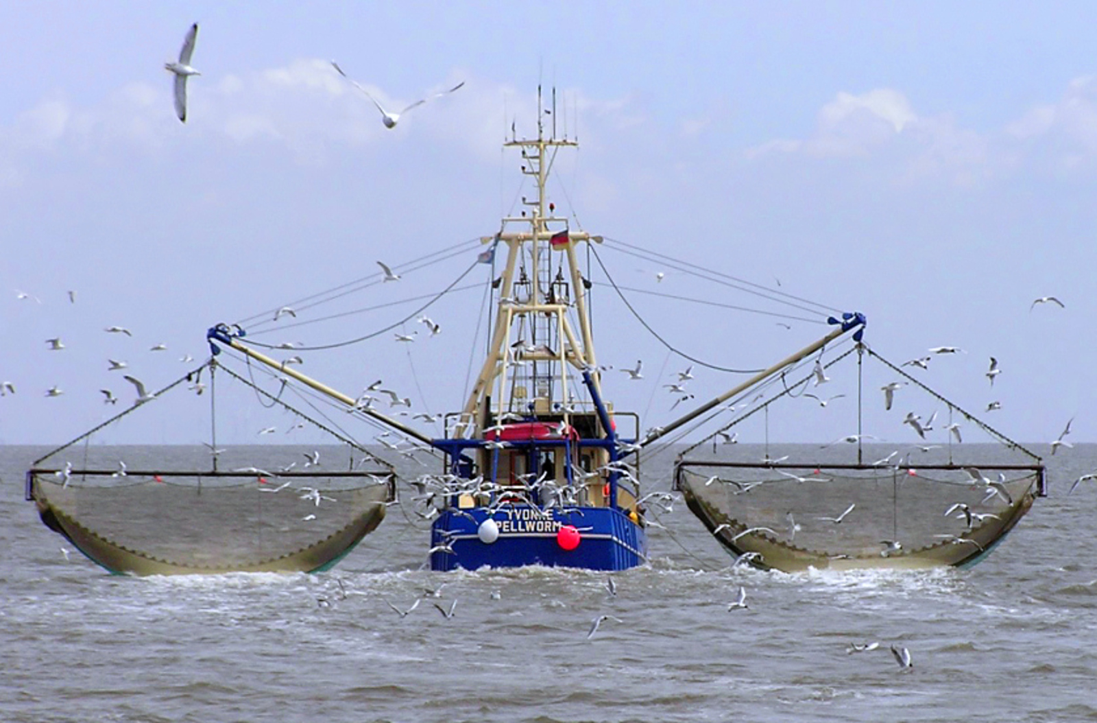How Eating Seafood Kills Our Oceans