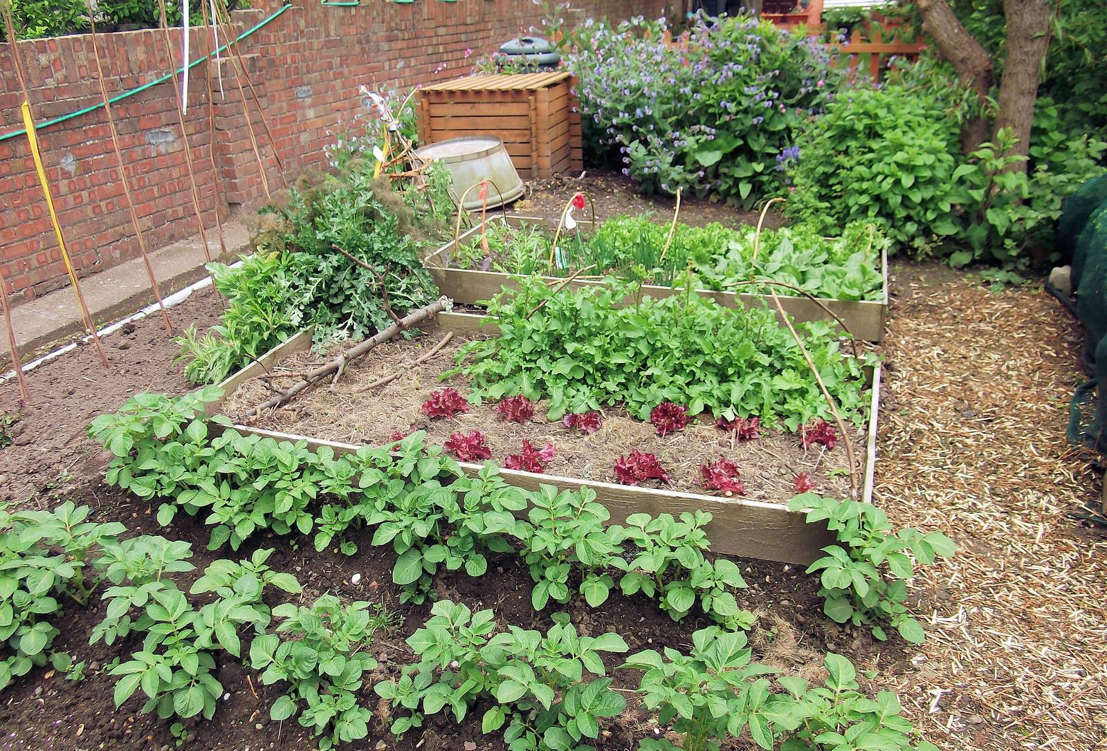 5 Easy Veggies to Grow Today!