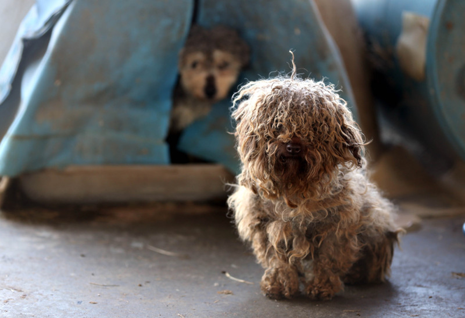Inside a Puppy Mill