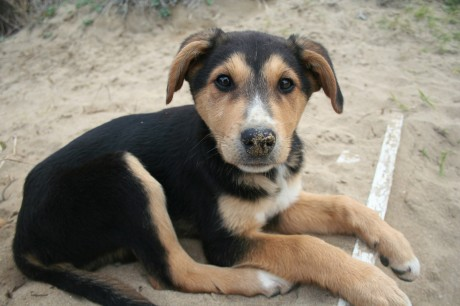 5 Amazing Stray Dog Rescue Groups in the U.S.