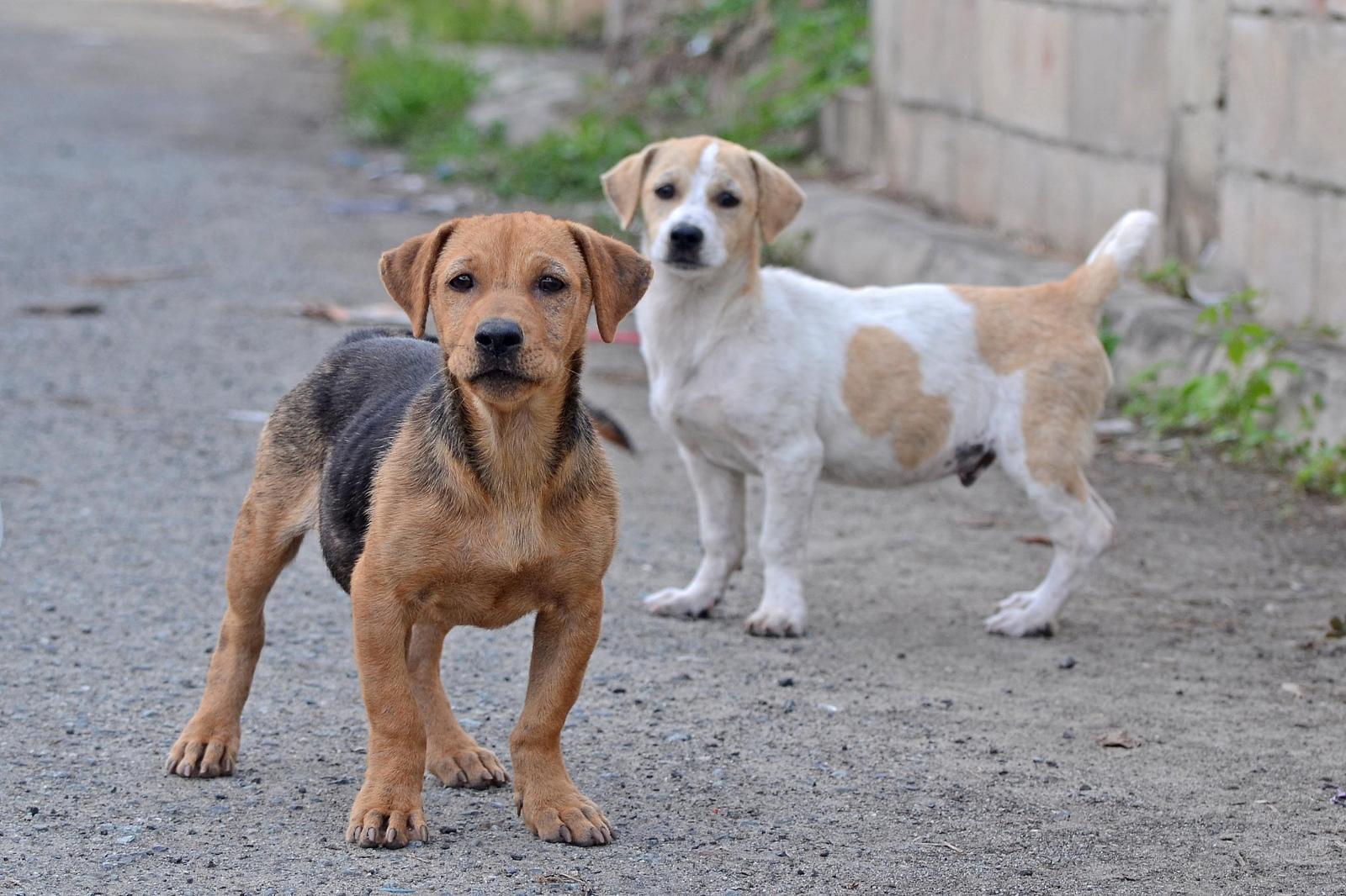 7 Amazing Street Dog Rescue Groups