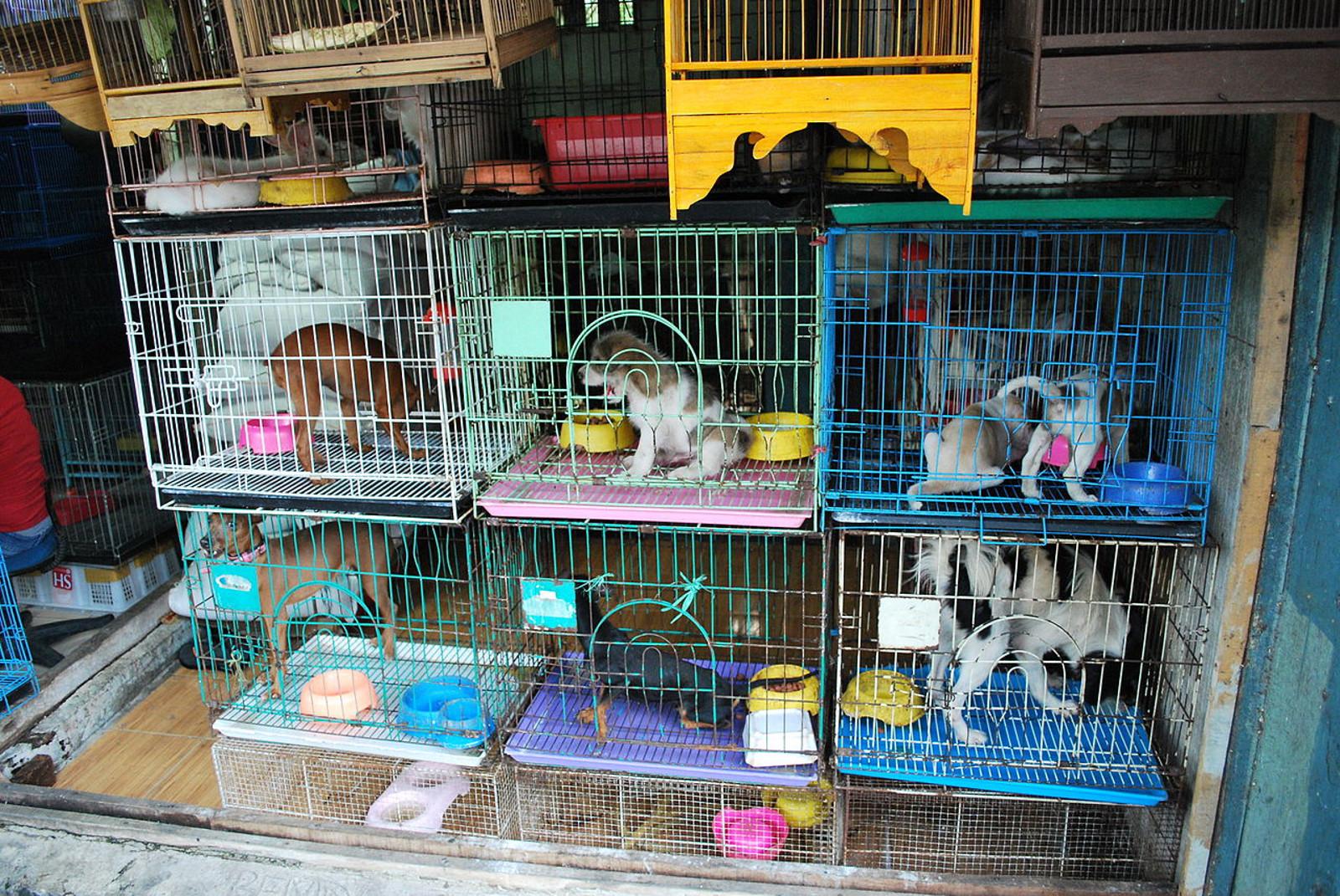 The Pet Trade: A Paradise for Pocket Profit