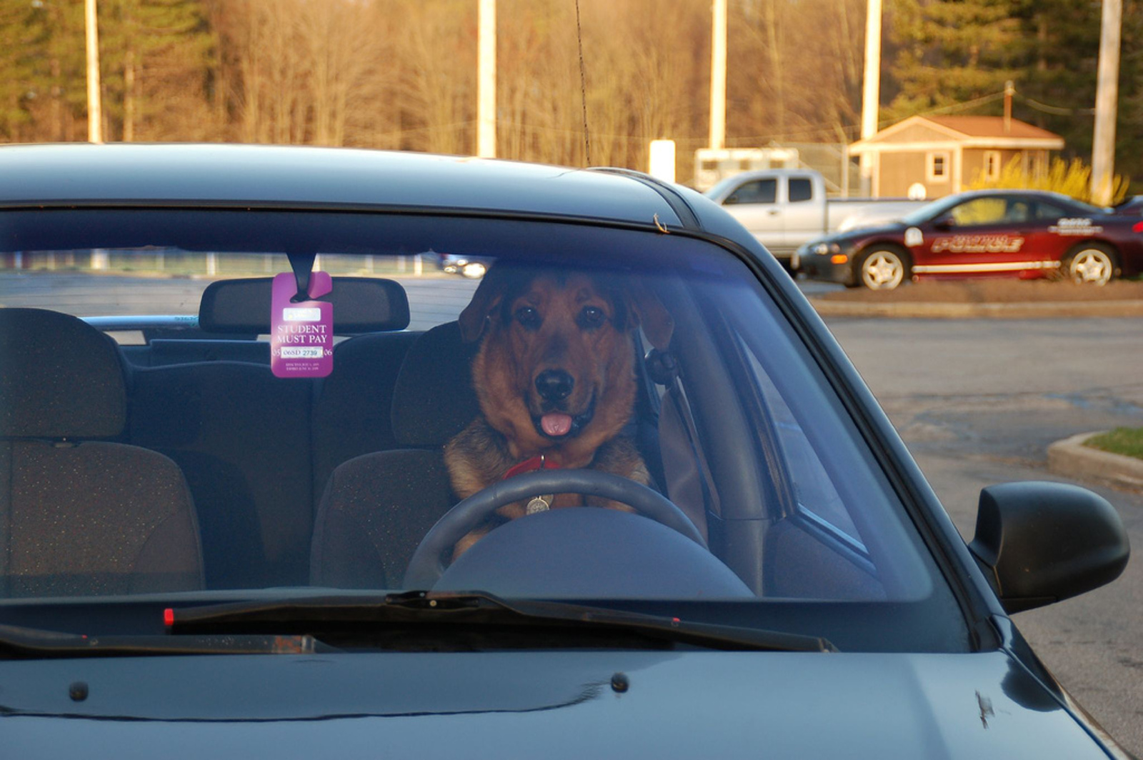 Hot Cars Can Spell Disaster for Pets!