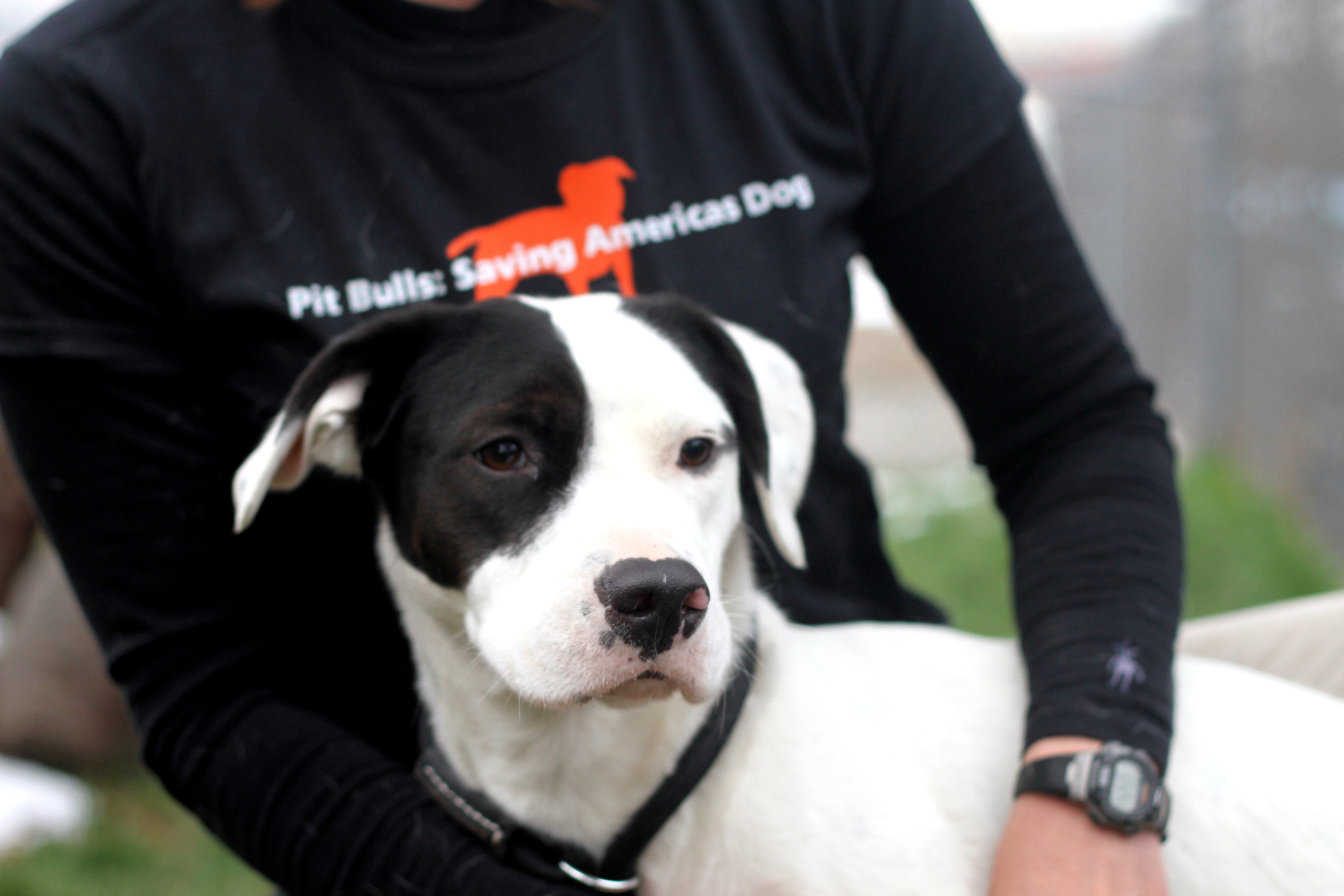5 Amazing Pit Bull Rescue Groups