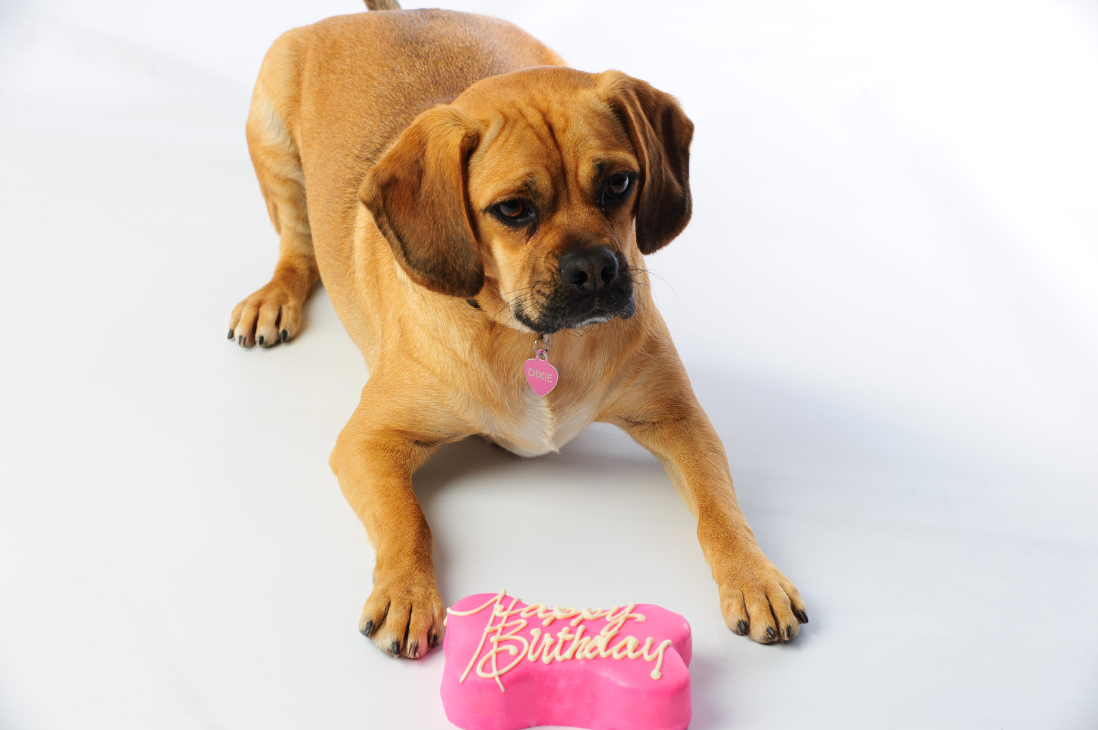 How to Make Your Dog a Rockin' Birthday Cake