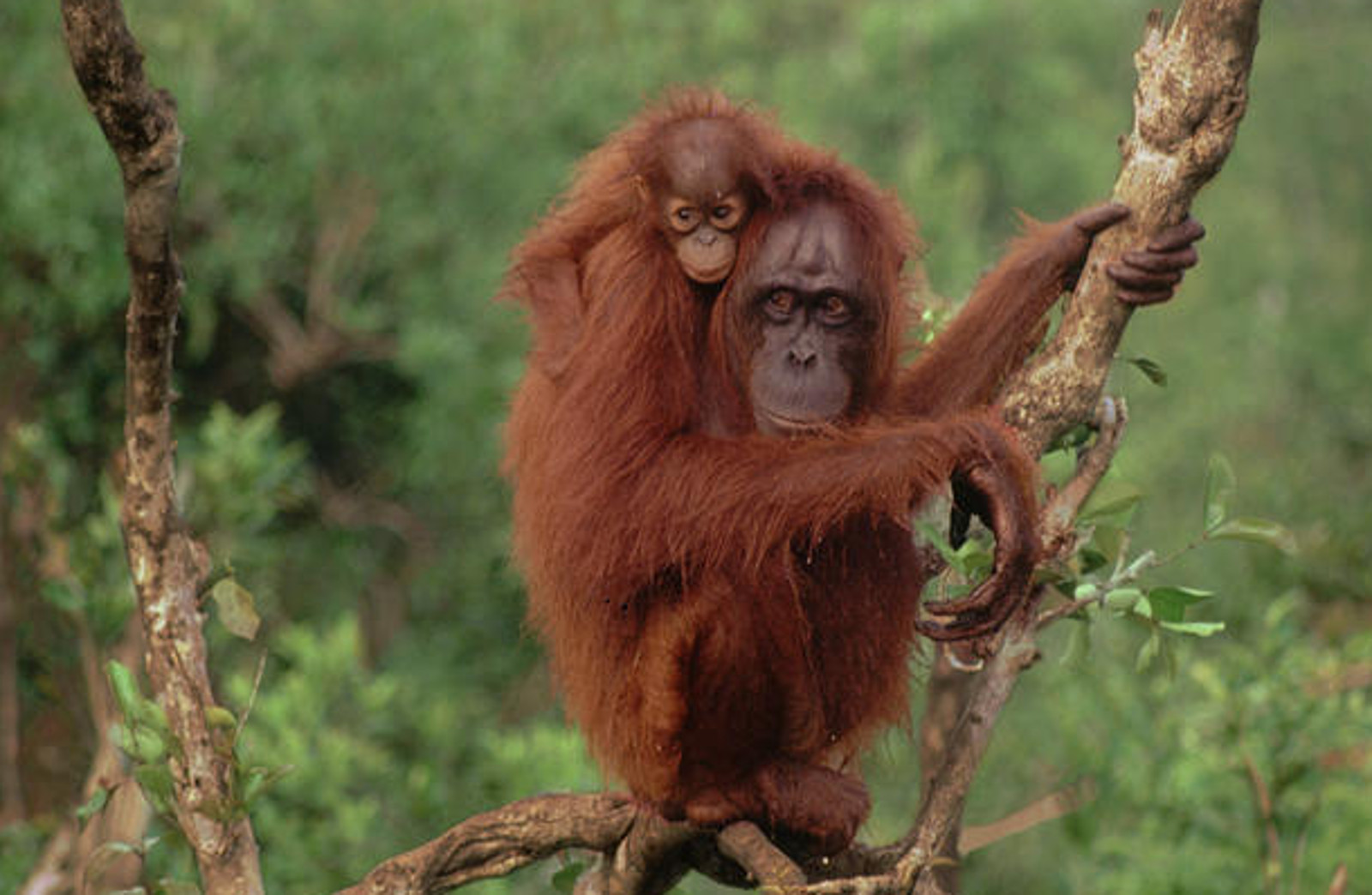 Why You Should Avoid Palm Oil, and How to Do it