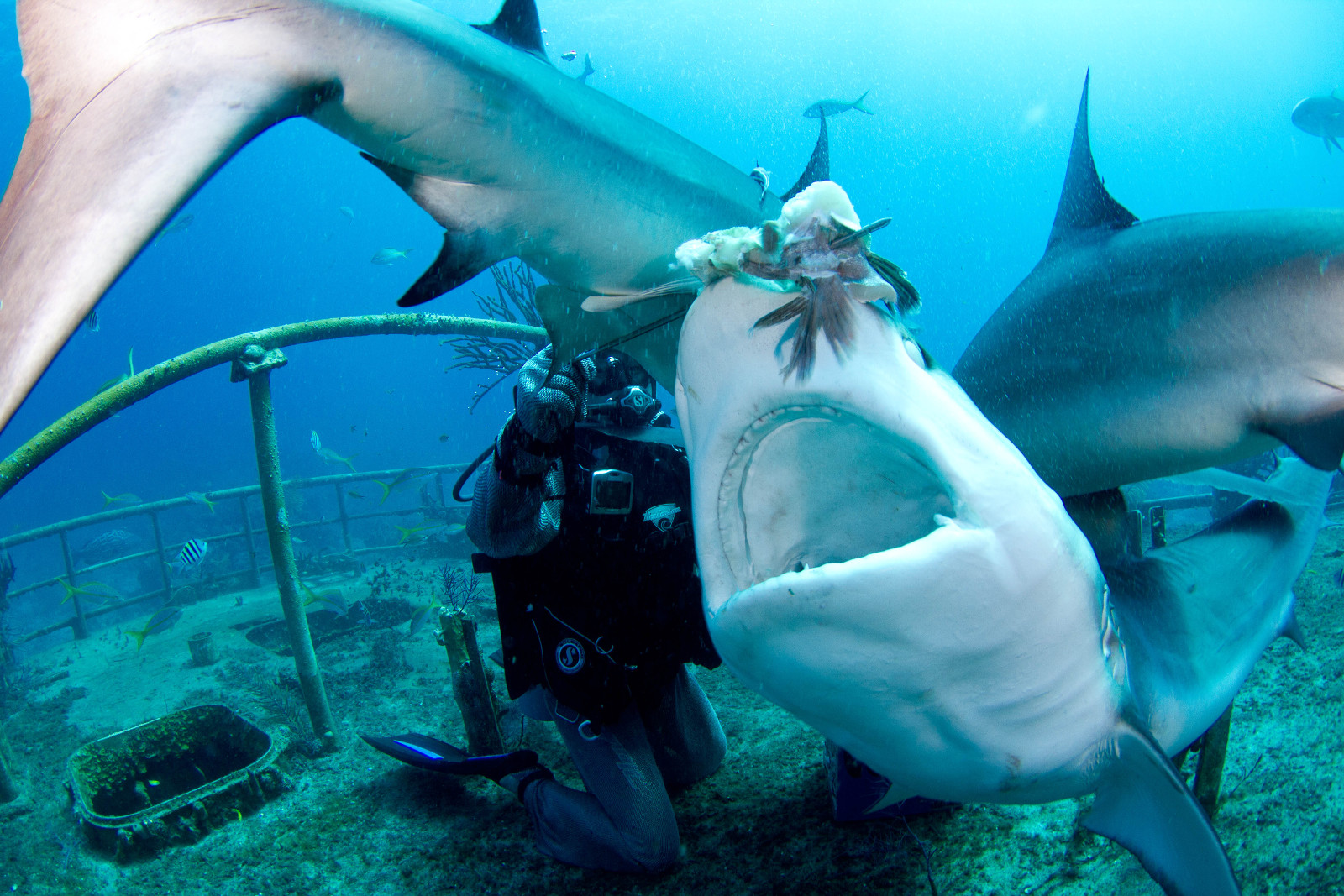 Should You Take the Bait? The Goods and the Bads of Shark Ecotourism