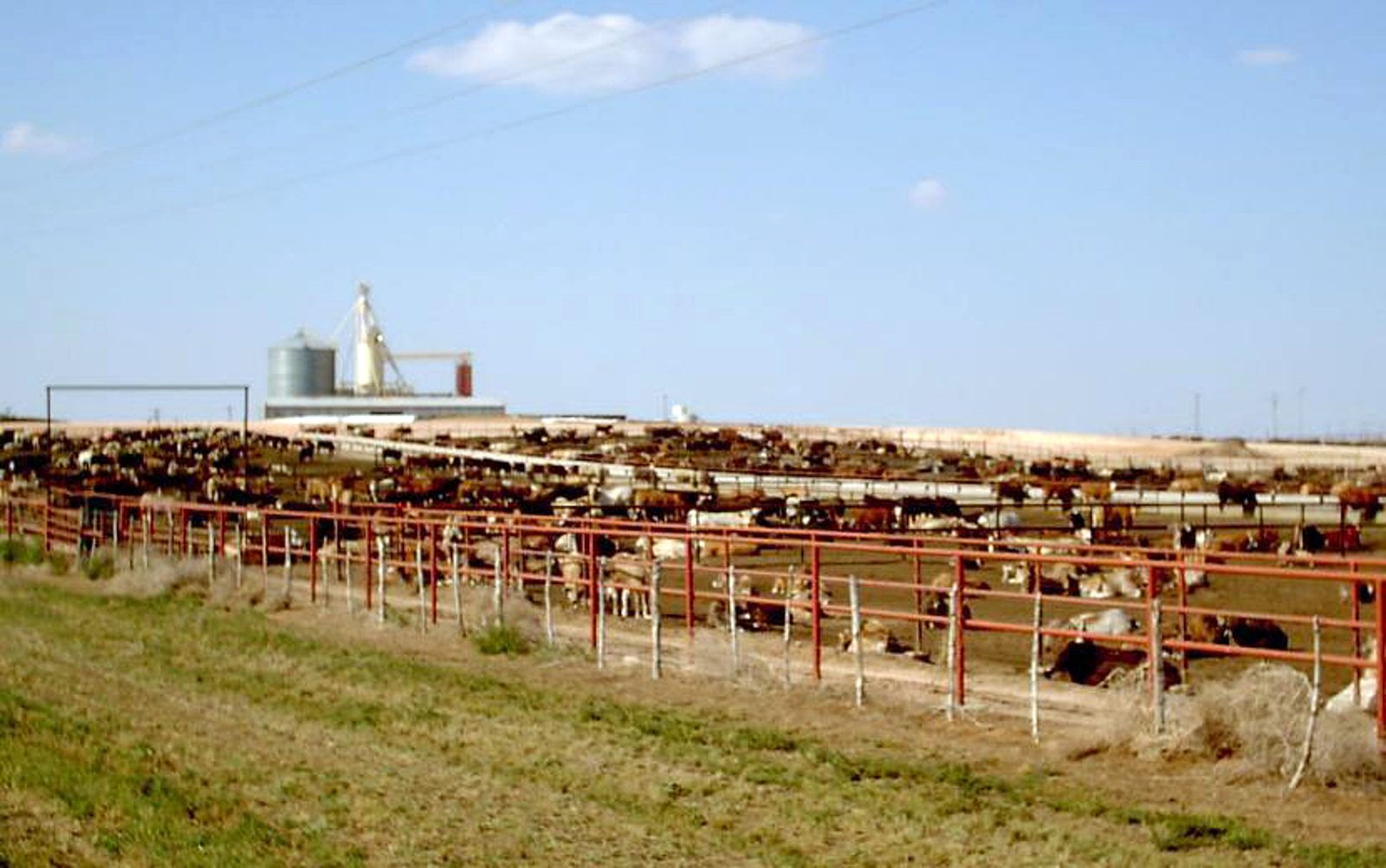Ways Factory Farming Pollutes Air