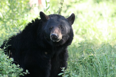Men Rescue Black Bear With Milk Can Stuck On Head