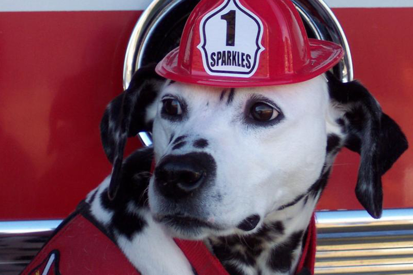 Tips for Keeping Pets Safe in Case of Fire for National Pet Fire Safety Day