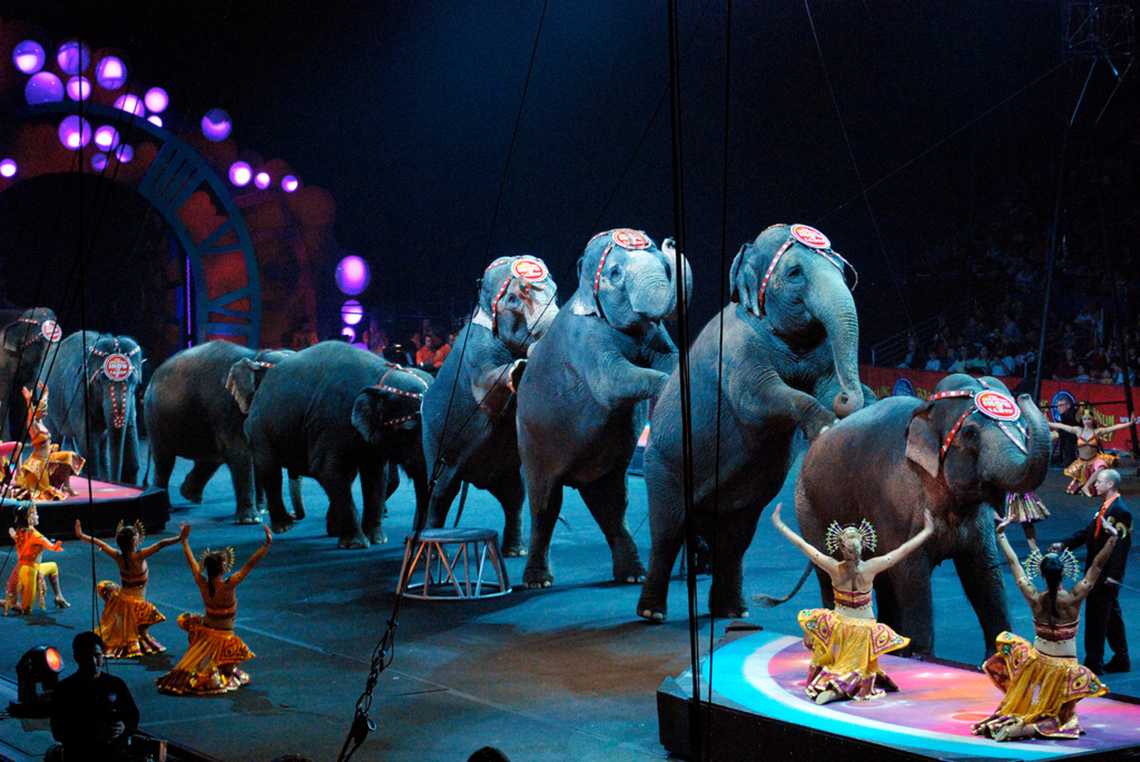 Woohoo! The Netherlands Bans the Use of Wild Animals in the Circus!
