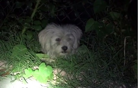 Scared Homeless Pup Rescued During Fireworks Display