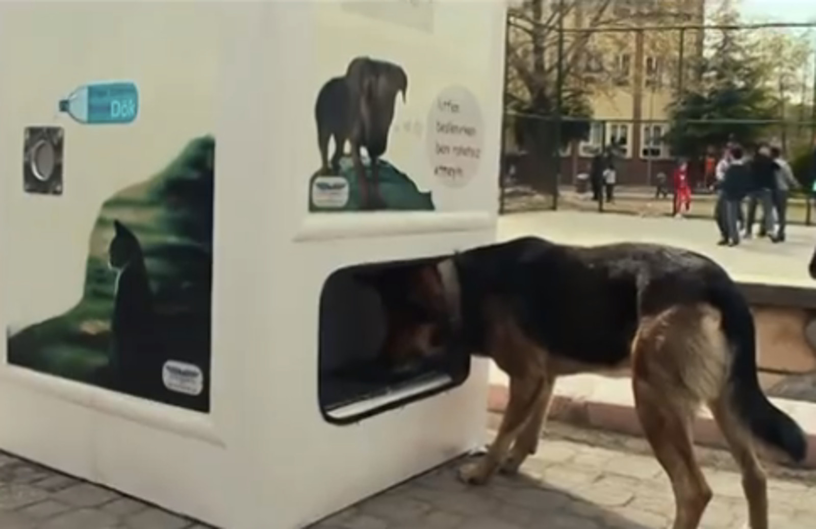 Brilliant New Idea to Encourages Recycling and Also Helps Stray Dogs!