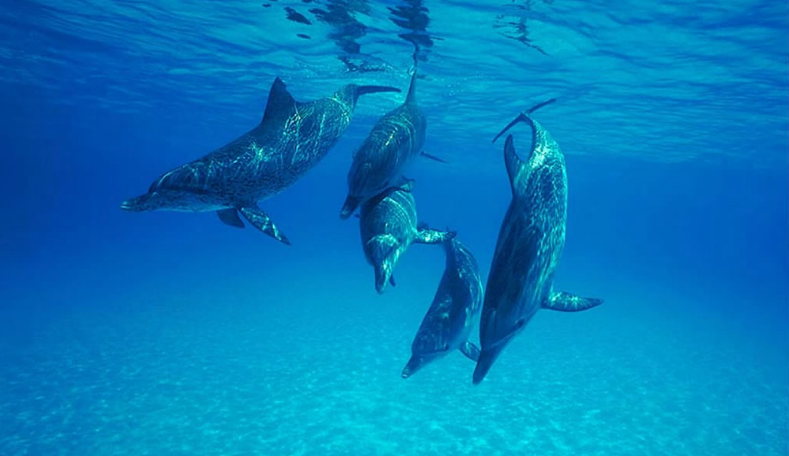 5 Marine Animal Rescue Hotlines