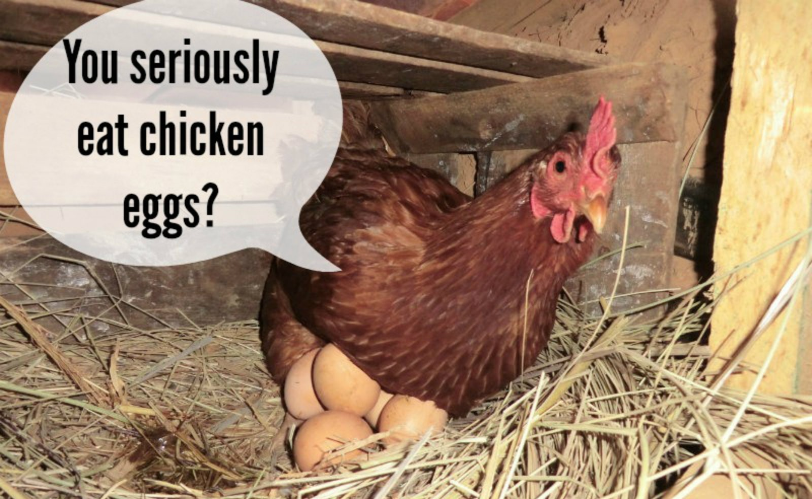 """Chickens that Want You to """"Peck"""" Meat and Egg Substitutes"""